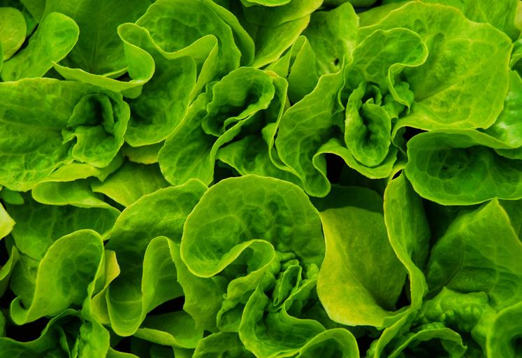 Los condimentos que marcan tendencia en el nuevo escenario alimentario